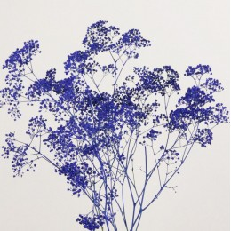 Γυψοφύλλη Μπλε Βαμμένη