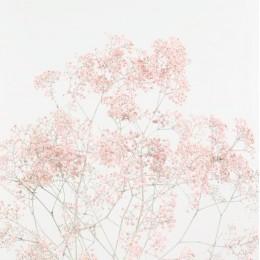 Γυψοφύλλη Ροζ Βαμμένη