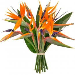 Ανθοδέσμη Λουλούδια 10 Στερλίτσιες